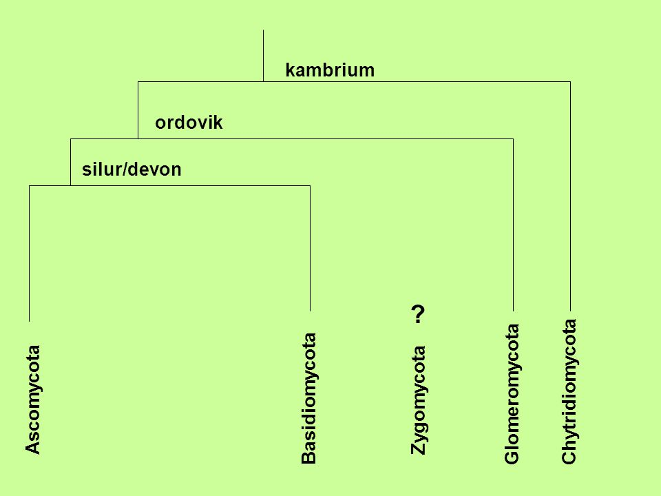 kambrium ordovik silur/devon Chytridiomycota Glomeromycota