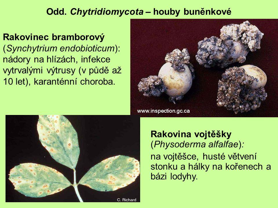 Odd. Chytridiomycota – houby buněnkové