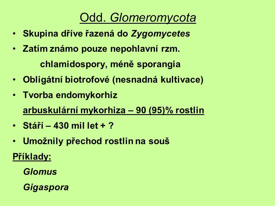 Odd. Glomeromycota Skupina dříve řazená do Zygomycetes