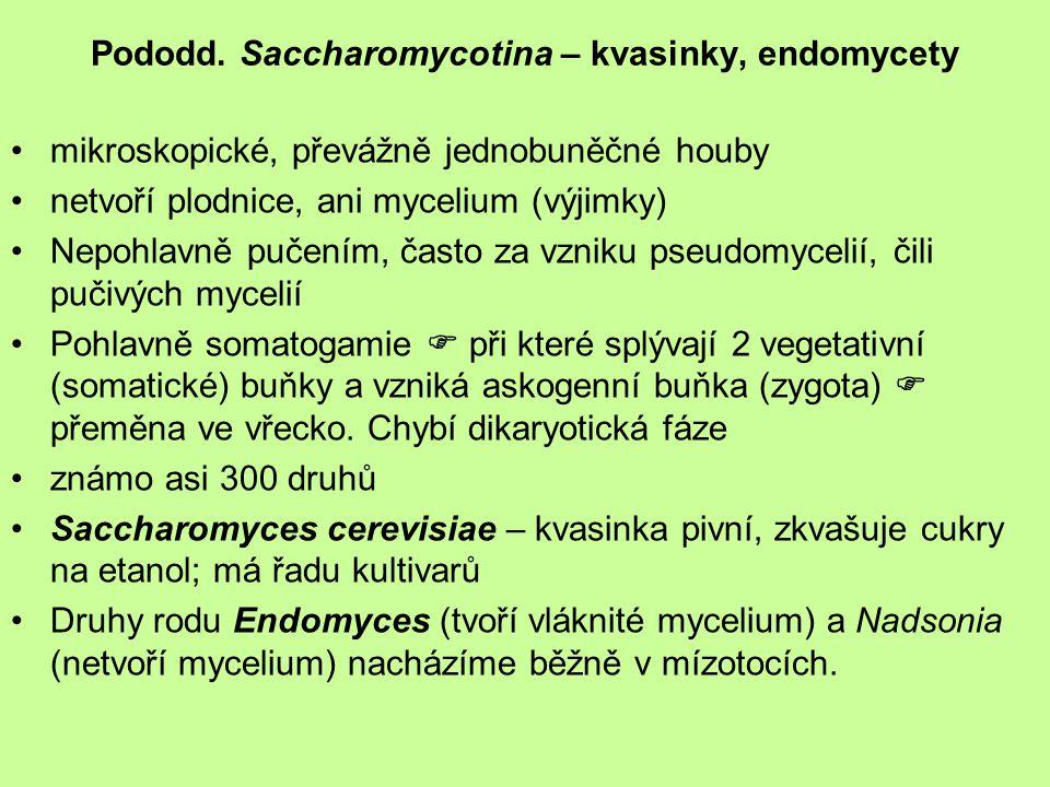 Pododd. Saccharomycotina – kvasinky, endomycety