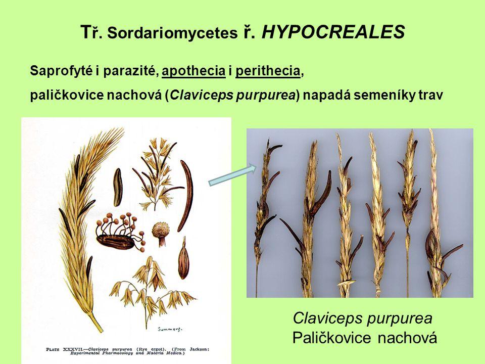 Tř. Sordariomycetes ř. HYPOCREALES