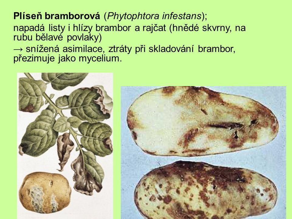 Plíseň bramborová (Phytophtora infestans);