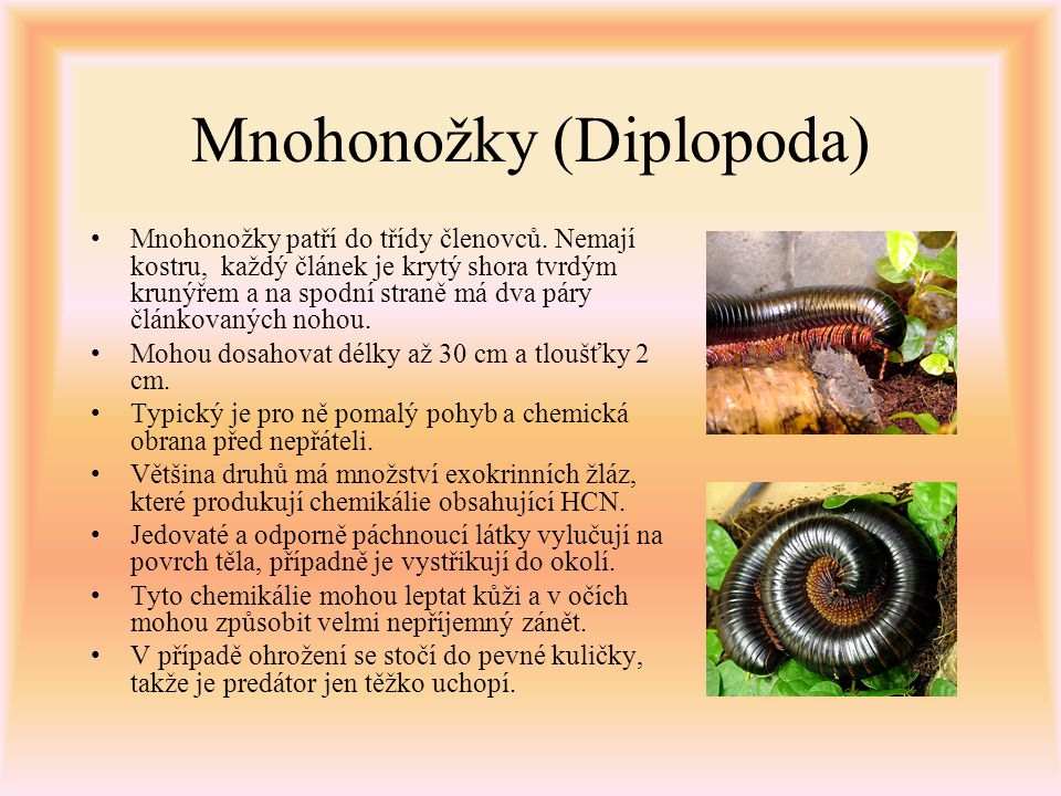 Mnohonožky (Diplopoda)