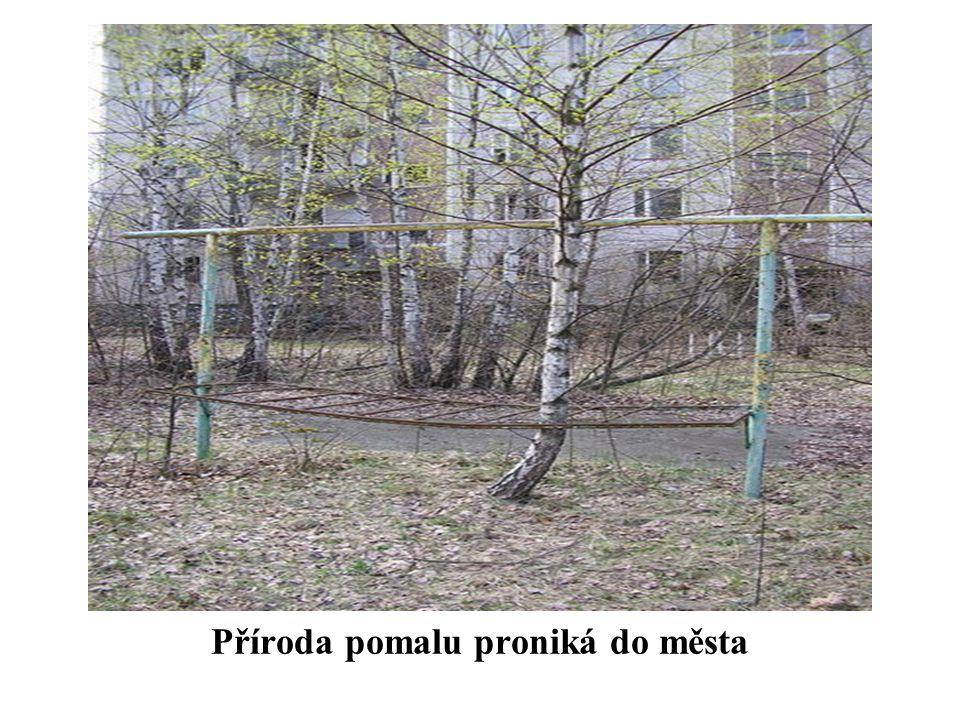 Příroda pomalu proniká do města