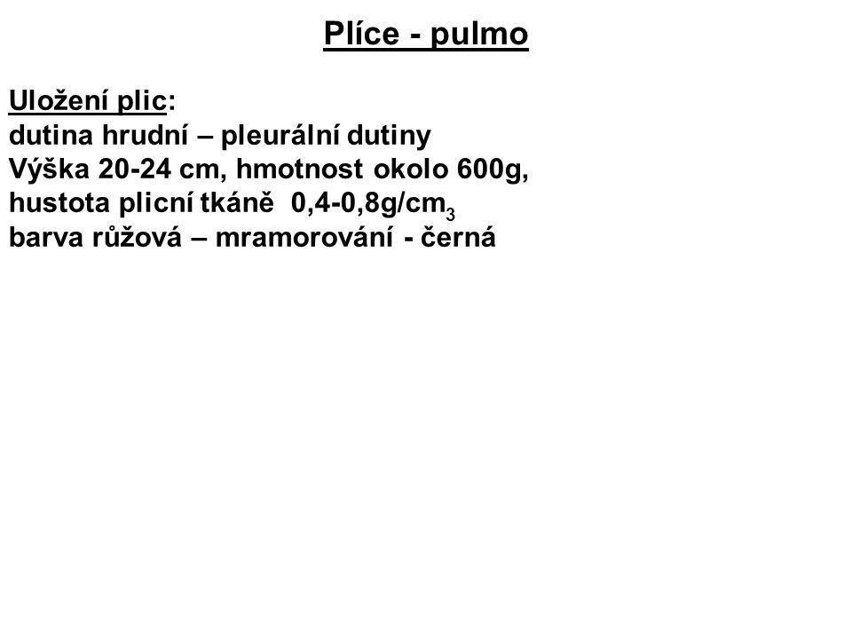 Plíce - pulmo Uložení plic: dutina hrudní – pleurální dutiny