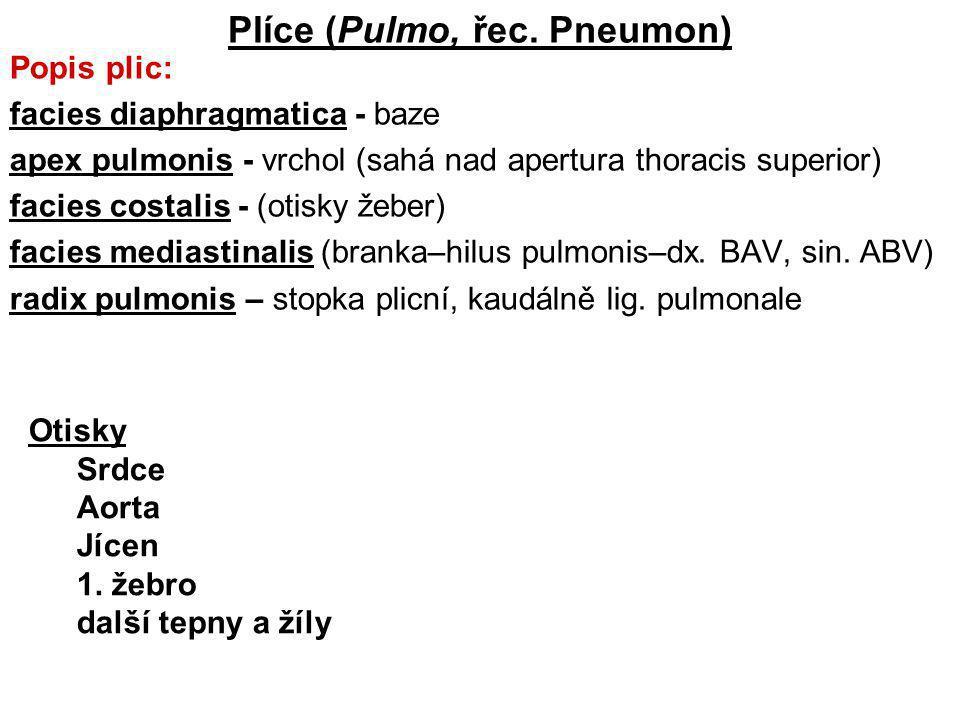Plíce (Pulmo, řec. Pneumon)