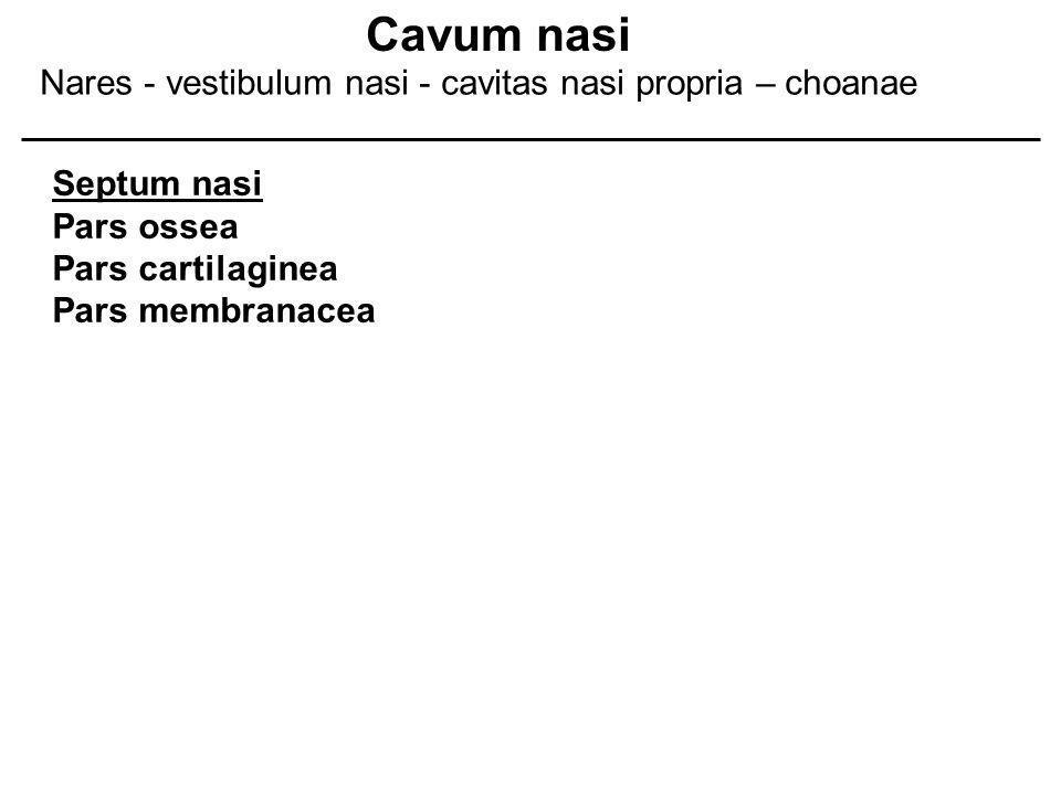 Cavum nasi Nares - vestibulum nasi - cavitas nasi propria – choanae
