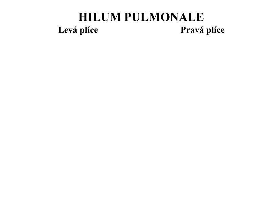 HILUM PULMONALE Levá plíce Pravá plíce