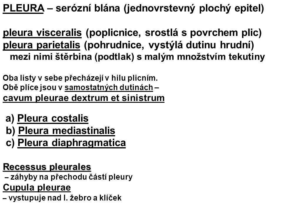 PLEURA – serózní blána (jednovrstevný plochý epitel)