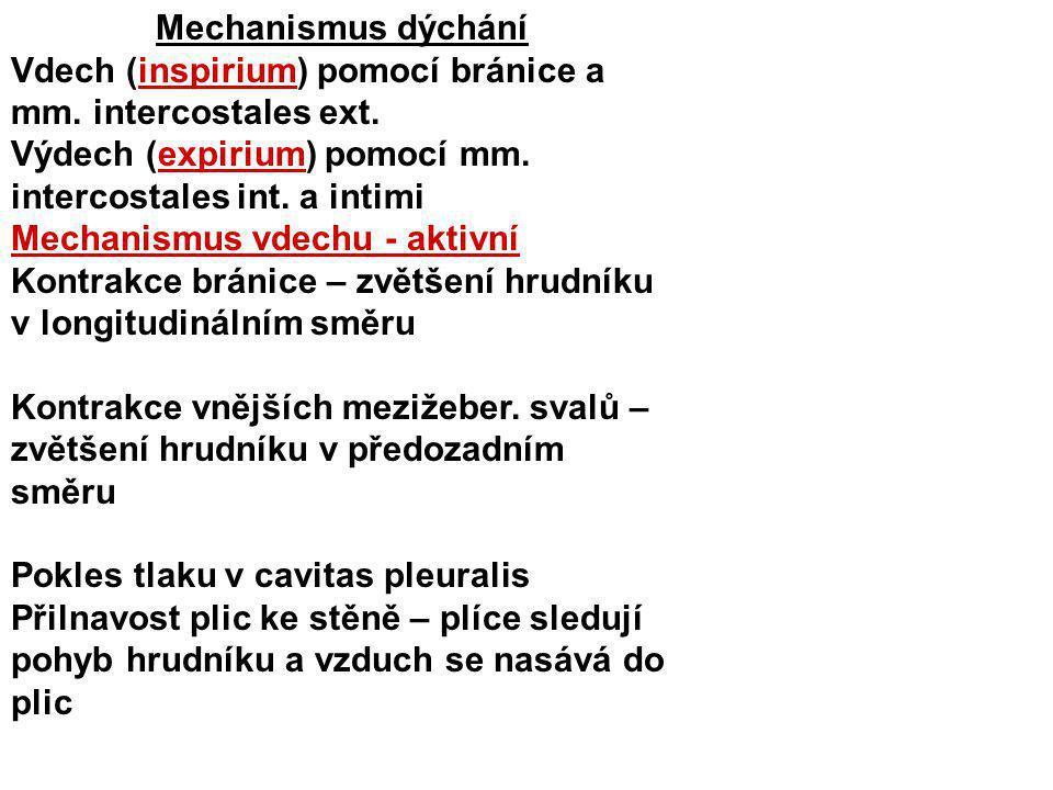 Mechanismus dýchání Vdech (inspirium) pomocí bránice a mm. intercostales ext. Výdech (expirium) pomocí mm. intercostales int. a intimi.