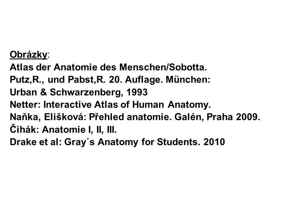 Obrázky: Atlas der Anatomie des Menschen/Sobotta. Putz,R., und Pabst,R. 20. Auflage. München: Urban & Schwarzenberg, 1993.