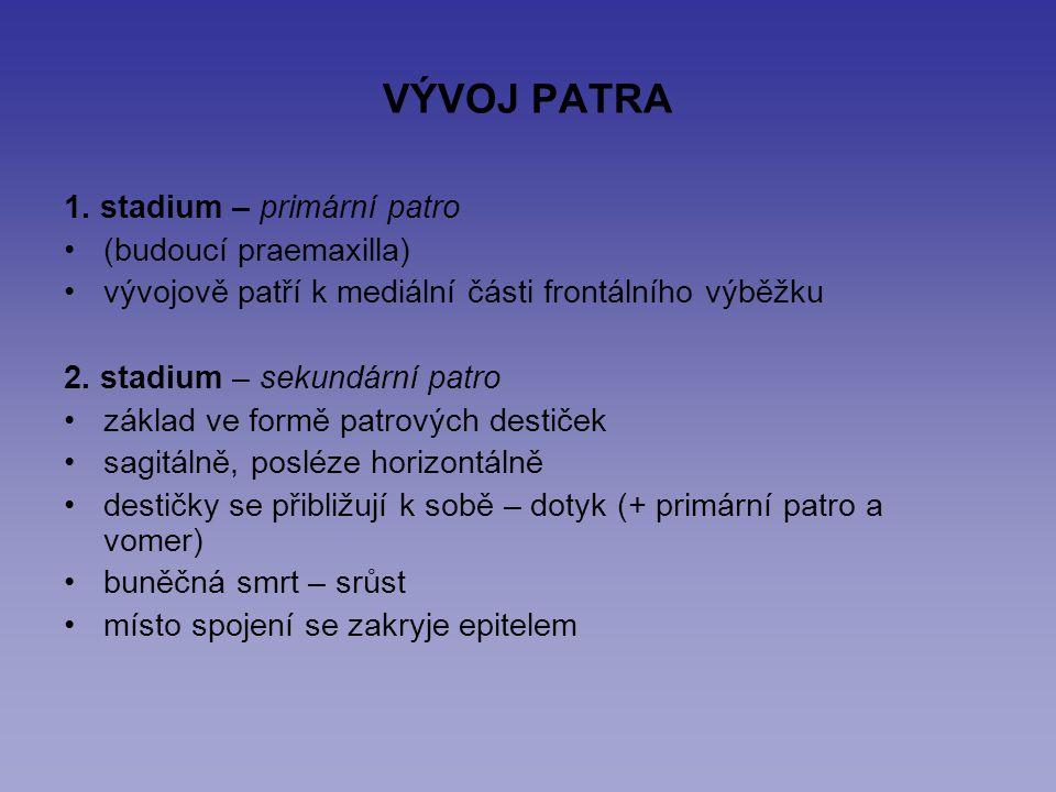 VÝVOJ PATRA 1. stadium – primární patro (budoucí praemaxilla)