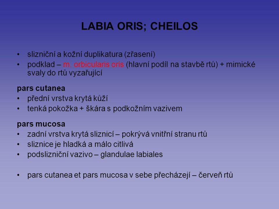 LABIA ORIS; CHEILOS slizniční a kožní duplikatura (zřasení)
