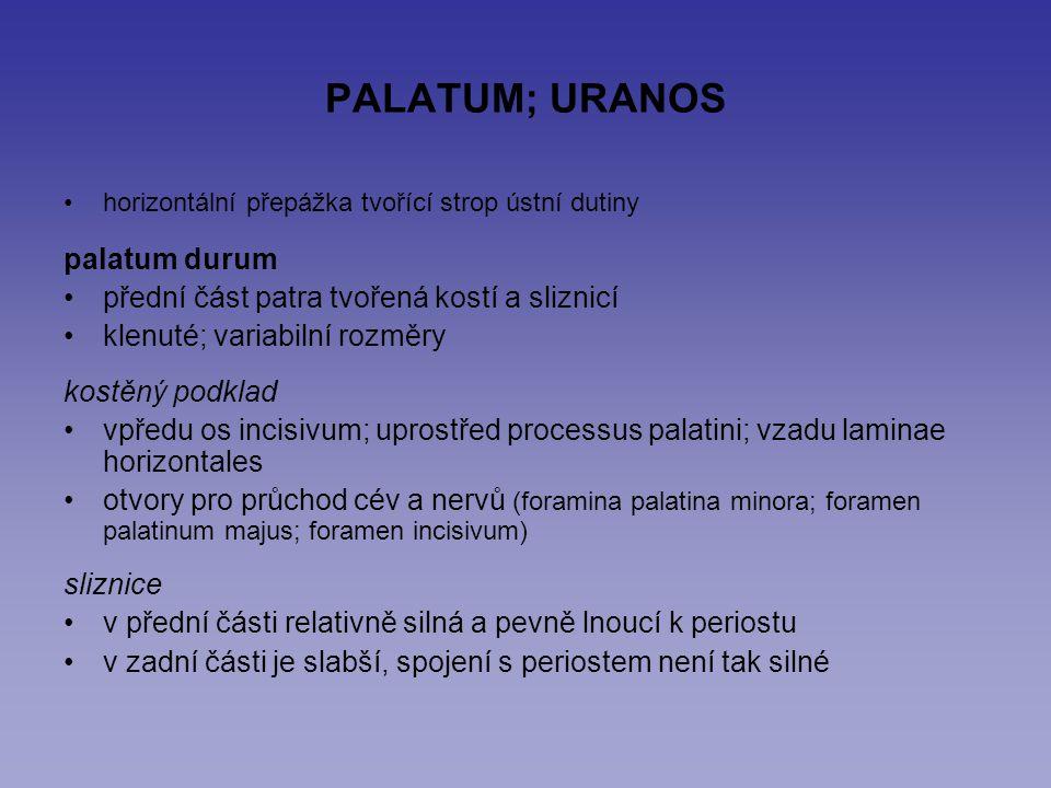 PALATUM; URANOS palatum durum