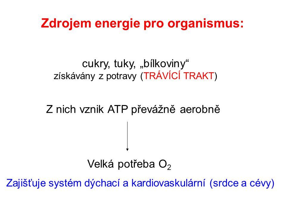 Zdrojem energie pro organismus:
