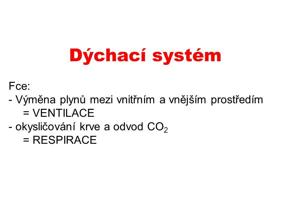 Dýchací systém Fce: Výměna plynů mezi vnitřním a vnějším prostředím