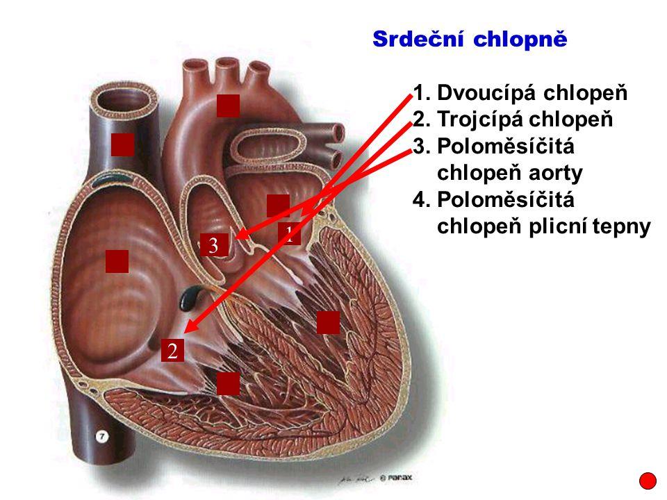 Srdeční chlopně 1. Dvoucípá chlopeň. 2. Trojcípá chlopeň. 3. Poloměsíčitá. chlopeň aorty. 4. Poloměsíčitá.