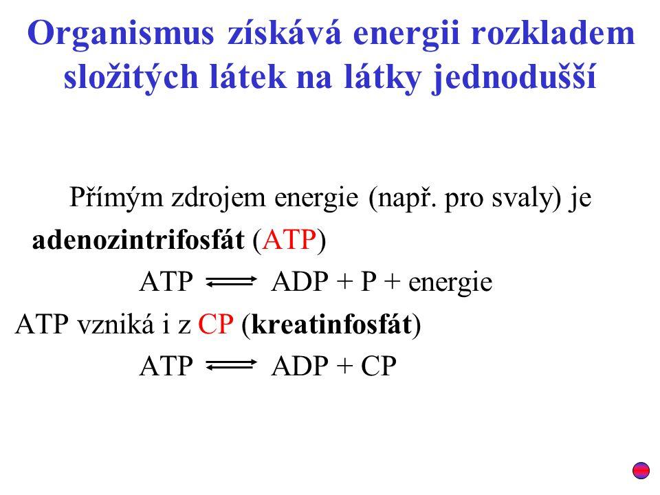 Přímým zdrojem energie (např. pro svaly) je