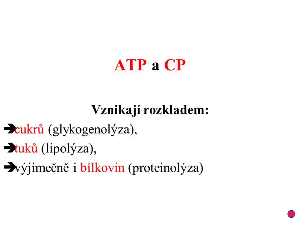 ATP a CP Vznikají rozkladem: cukrů (glykogenolýza), tuků (lipolýza),