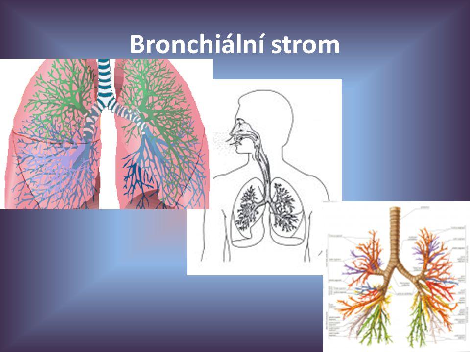 Bronchiální strom