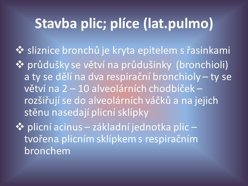 Stavba plic; plíce (lat.pulmo)