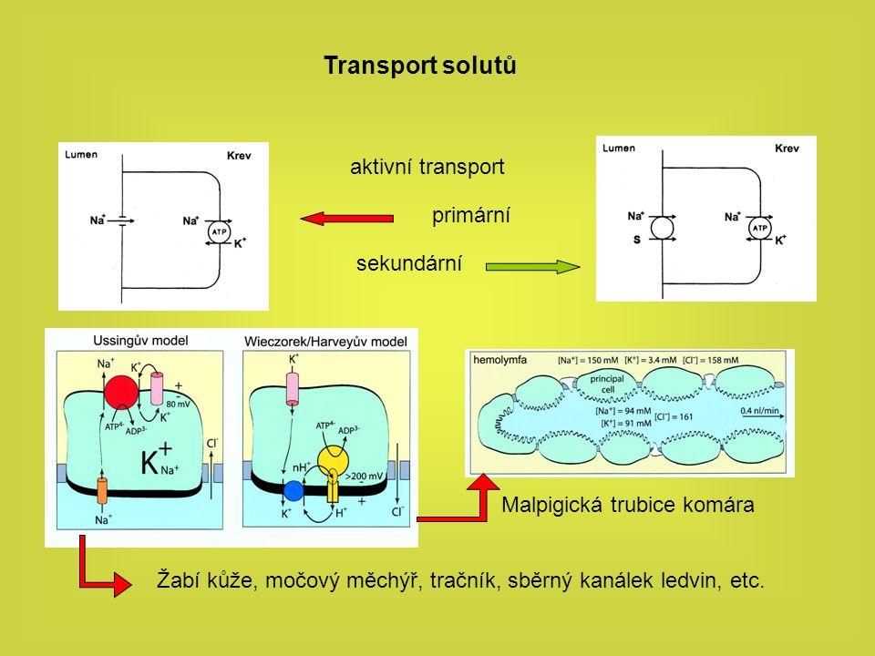 Transport solutů aktivní transport primární sekundární