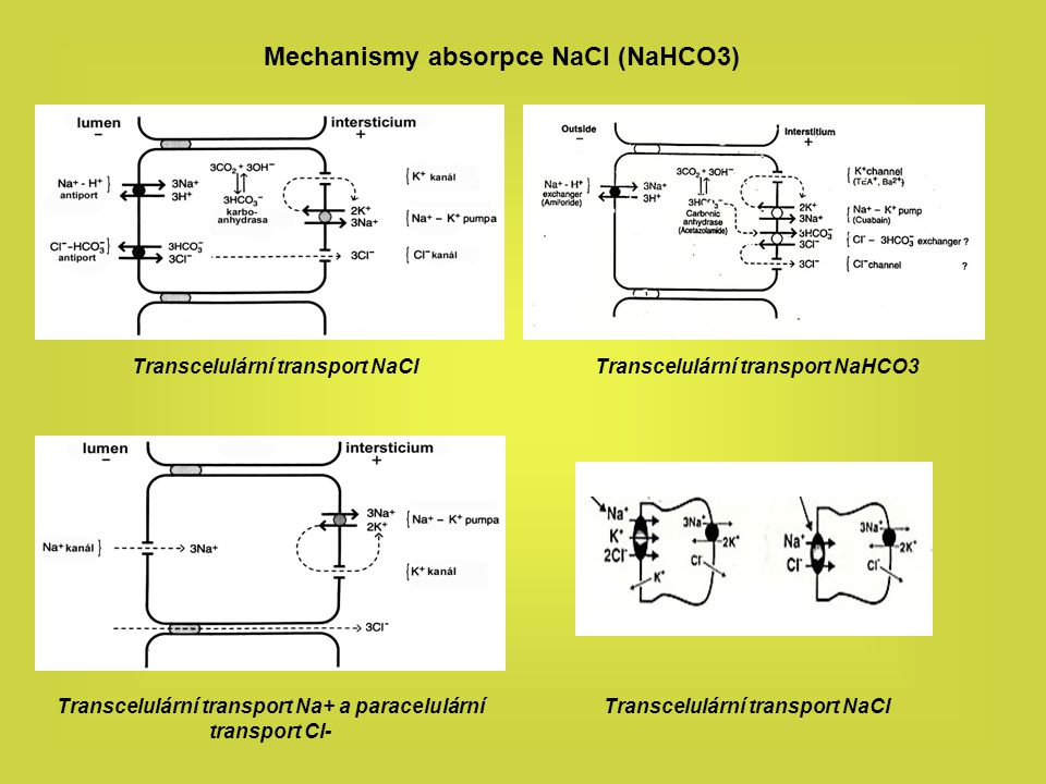 Mechanismy absorpce NaCl (NaHCO3)
