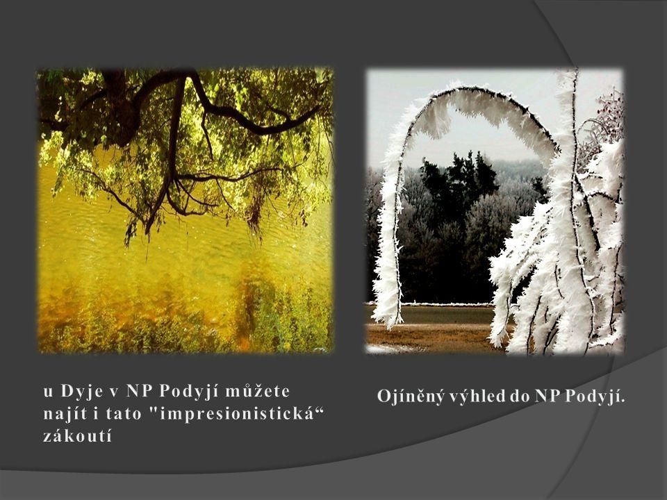 u Dyje v NP Podyjí můžete najít i tato impresionistická zákoutí