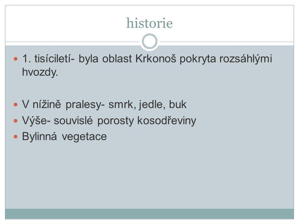 historie 1. tisíciletí- byla oblast Krkonoš pokryta rozsáhlými hvozdy.