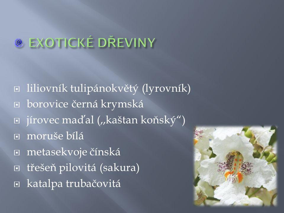 EXOTICKÉ DŘEVINY liliovník tulipánokvětý (lyrovník)