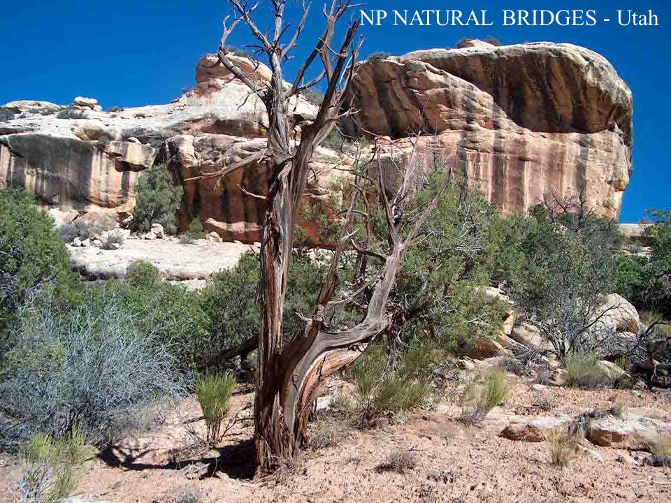 NP NATURAL BRIDGES - Utah