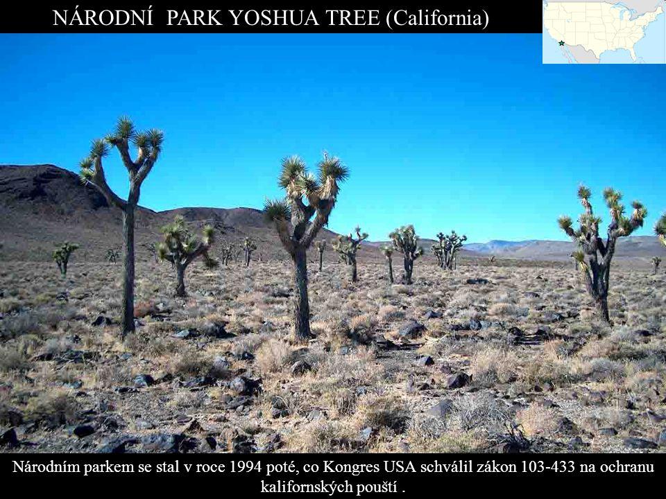 NÁRODNÍ PARK YOSHUA TREE (California)