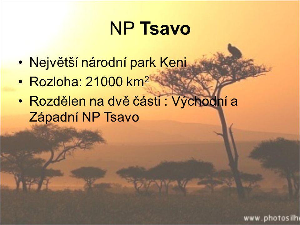 NP Tsavo Největší národní park Keni Rozloha: 21000 km2