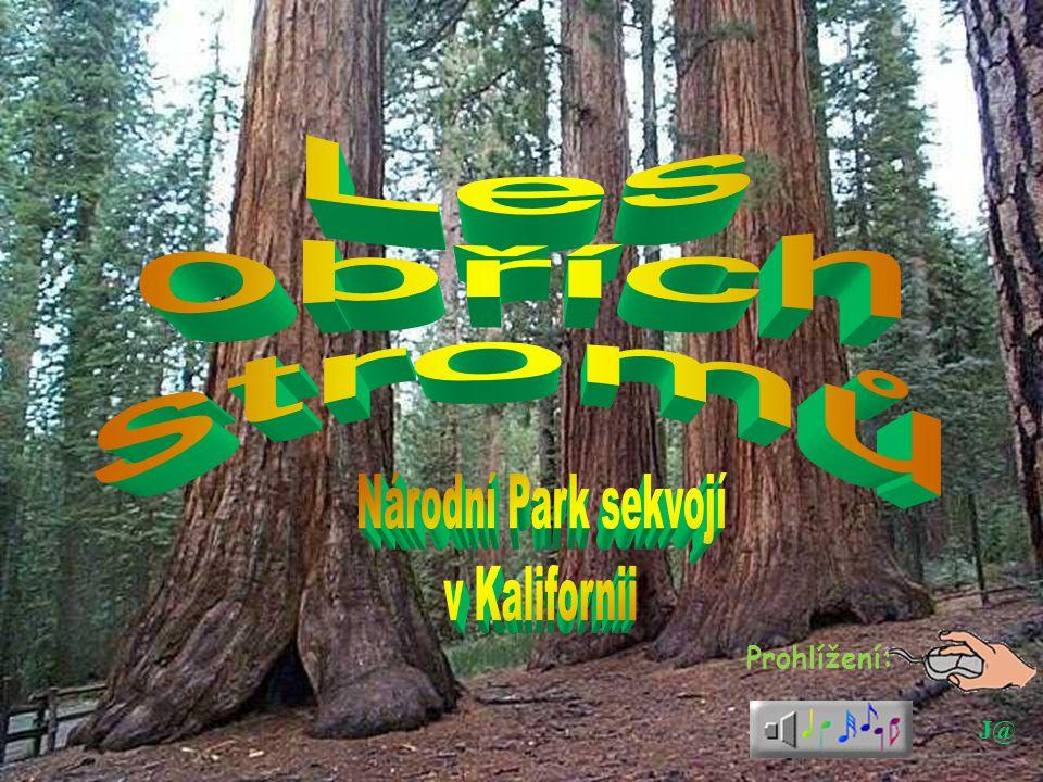 Les obřích stromů Národní Park sekvojí v Kalifornii Prohlížení: J@