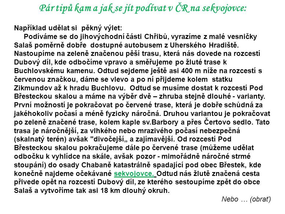 Pár tipů kam a jak se jít podívat v ČR na sekvojovce: