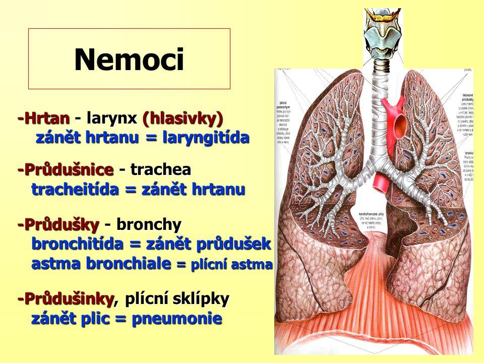 Nemoci -Hrtan - larynx (hlasivky) zánět hrtanu = laryngitída