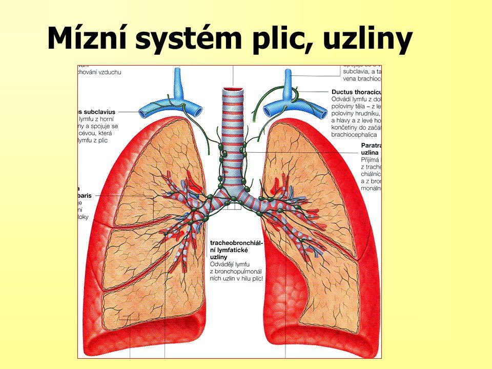 Mízní systém plic, uzliny