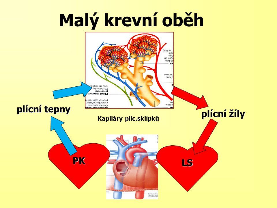 Malý krevní oběh plícní tepny plícní žíly Kapiláry plíc.sklípků PK LS