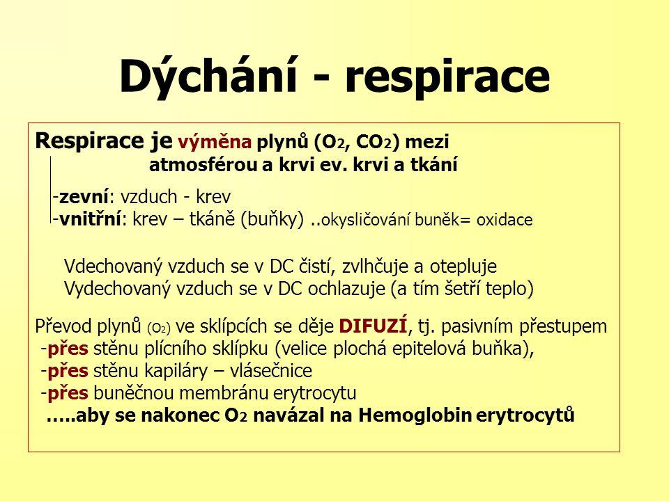 Dýchání - respirace Respirace je výměna plynů (O2, CO2) mezi