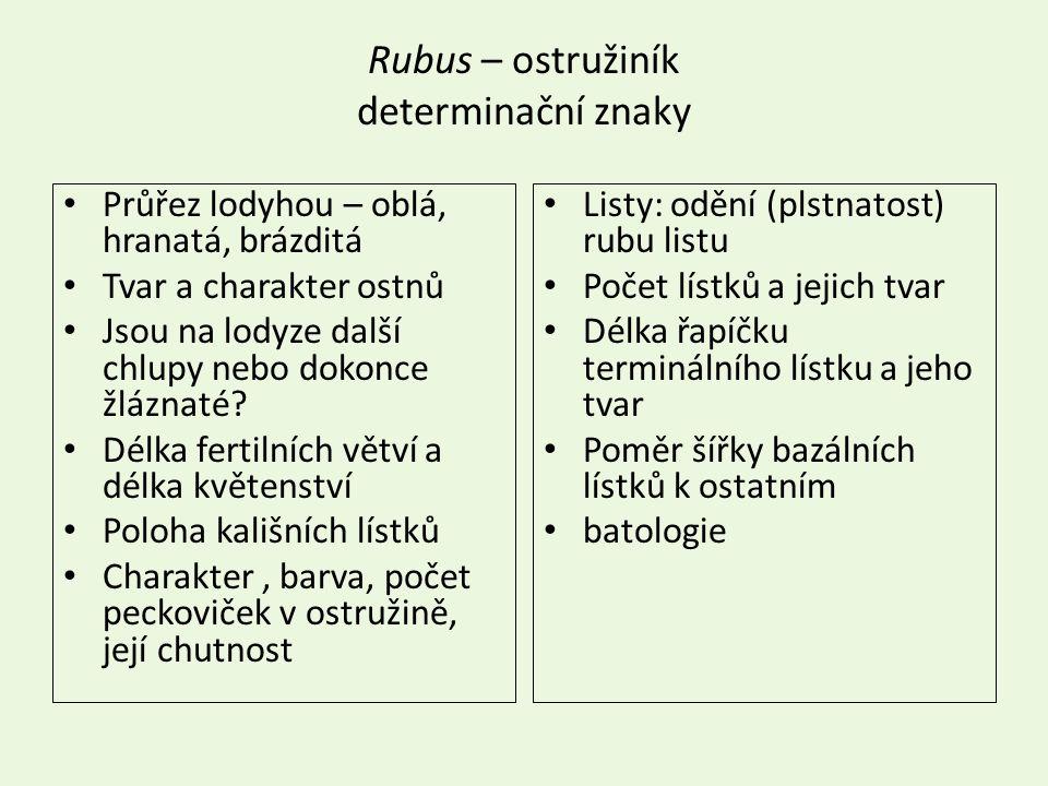 Rubus – ostružiník determinační znaky