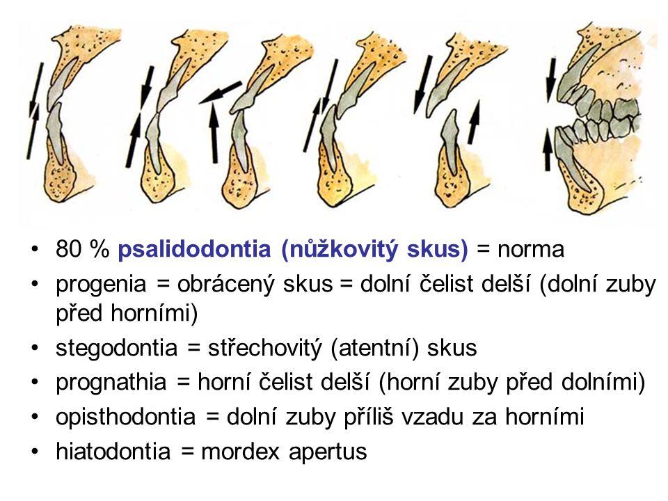 Chrup jako celek mordex = chrup ortodentní postavení – zuby svisle