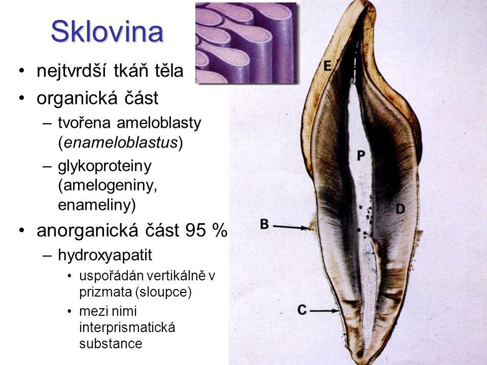 Sklovina nejtvrdší tkáň těla organická část anorganická část 95 %