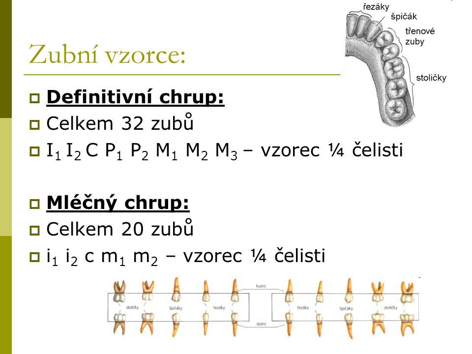 Zubní vzorce: Definitivní chrup: Celkem 32 zubů