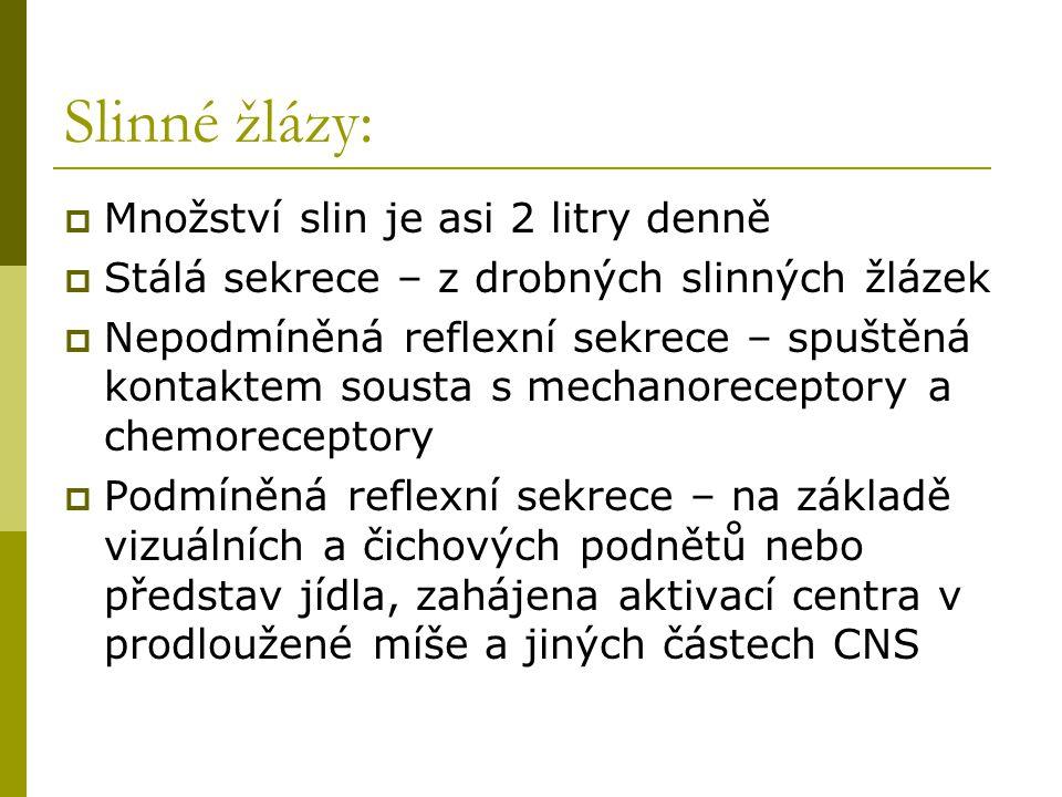 Slinné žlázy: Množství slin je asi 2 litry denně