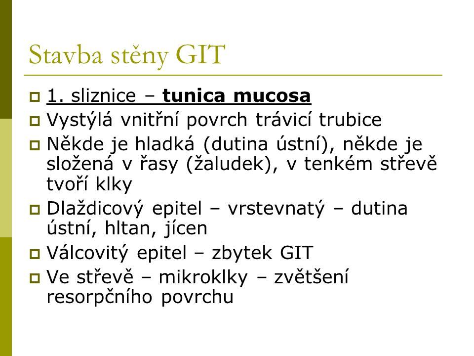 Stavba stěny GIT 1. sliznice – tunica mucosa