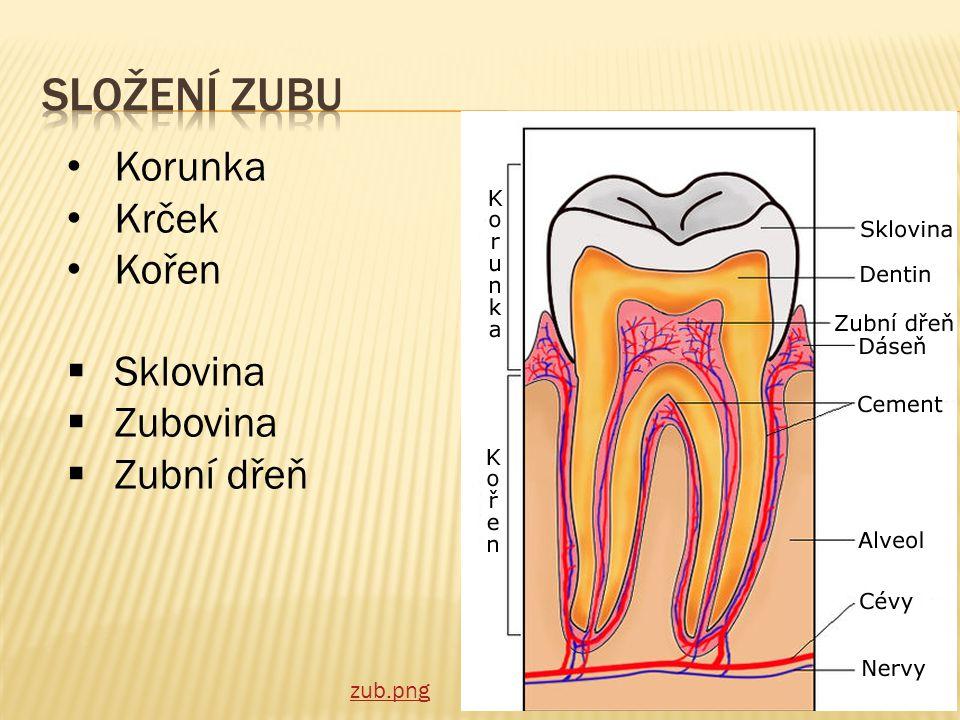 Složení zubu Korunka Krček Kořen Sklovina Zubovina Zubní dřeň zub.png