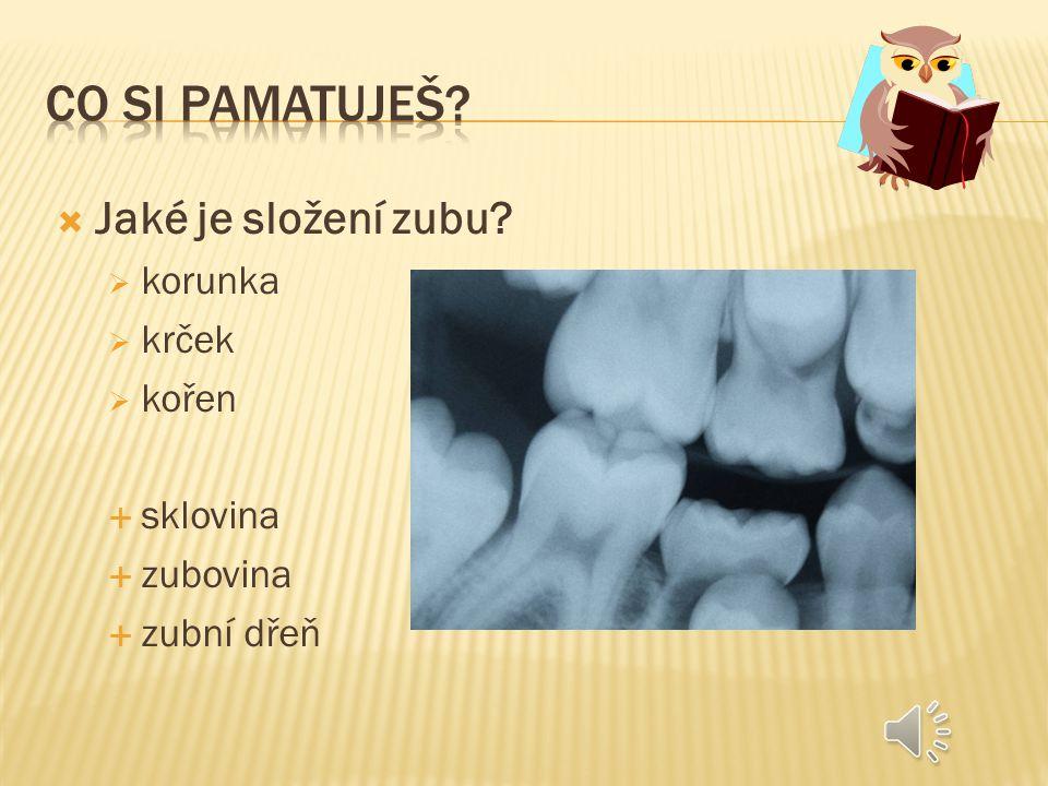 Co si pamatuješ Jaké je složení zubu korunka krček kořen sklovina
