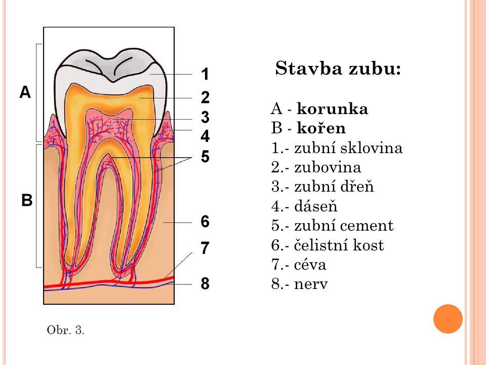 Stavba zubu: A - korunka B - kořen 1.- zubní sklovina 2.- zubovina 3.- zubní dřeň 4.- dáseň 5.- zubní cement 6.- čelistní kost 7.- céva 8.- nerv.