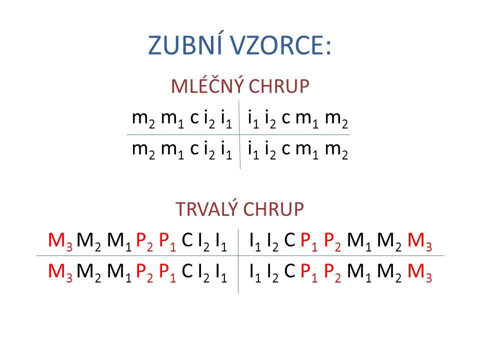 ZUBNÍ VZORCE: MLÉČNÝ CHRUP m2 m1 c i2 i1 i1 i2 c m1 m2 TRVALÝ CHRUP M3 M2 M1 P2 P1 C I2 I1 I1 I2 C P1 P2 M1 M2 M3
