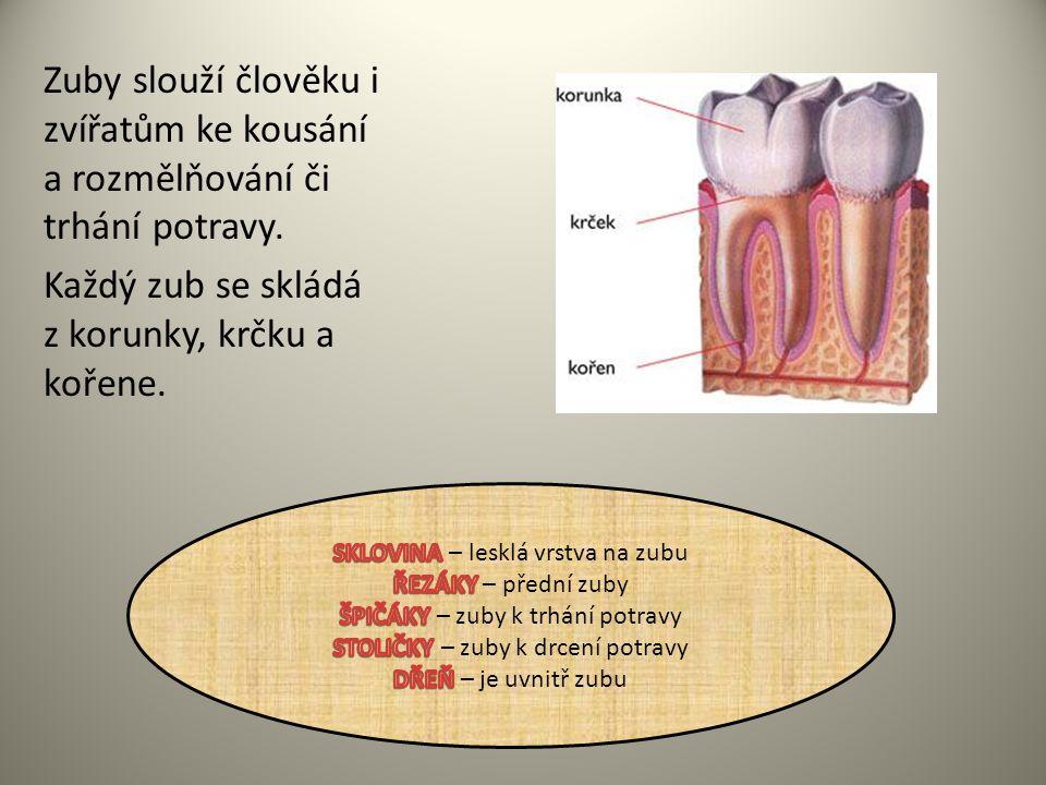 Každý zub se skládá z korunky, krčku a kořene.
